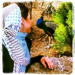 دانلود عکس طاووس