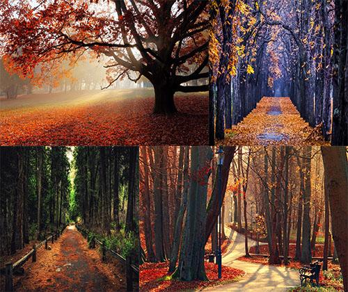 جدیدترین و زیباترین عکس های پادشاه فصل ها پاییز