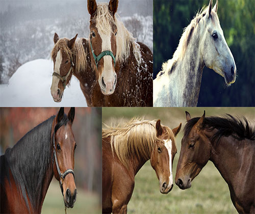 جدیدترین و قشنگترین عکس ها از زیباترین اسب ها