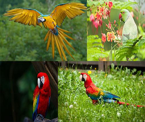 عکس های جدید و فوق العاده زیبا از طوطی ها