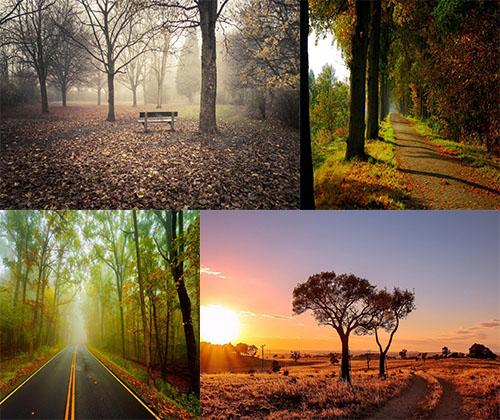 جدیدترین و بهترین عکس ها از قلی طبیعت با کیفیت بالا