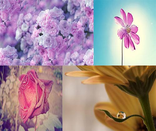 جدیدترین عکس ها از زیباترین و خوش بو ترین گل ها