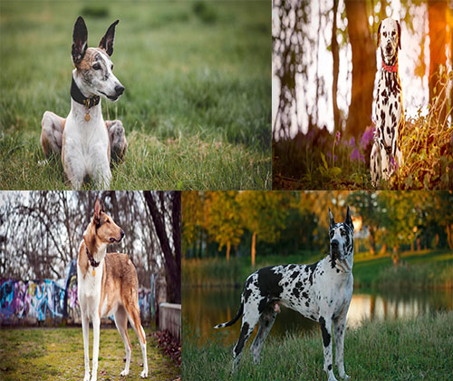 جدیدترین و بهترین عکس ها از سگ ها