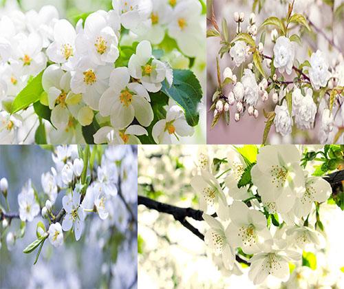 جدیدترین و بهترین عکس ها از گل ها