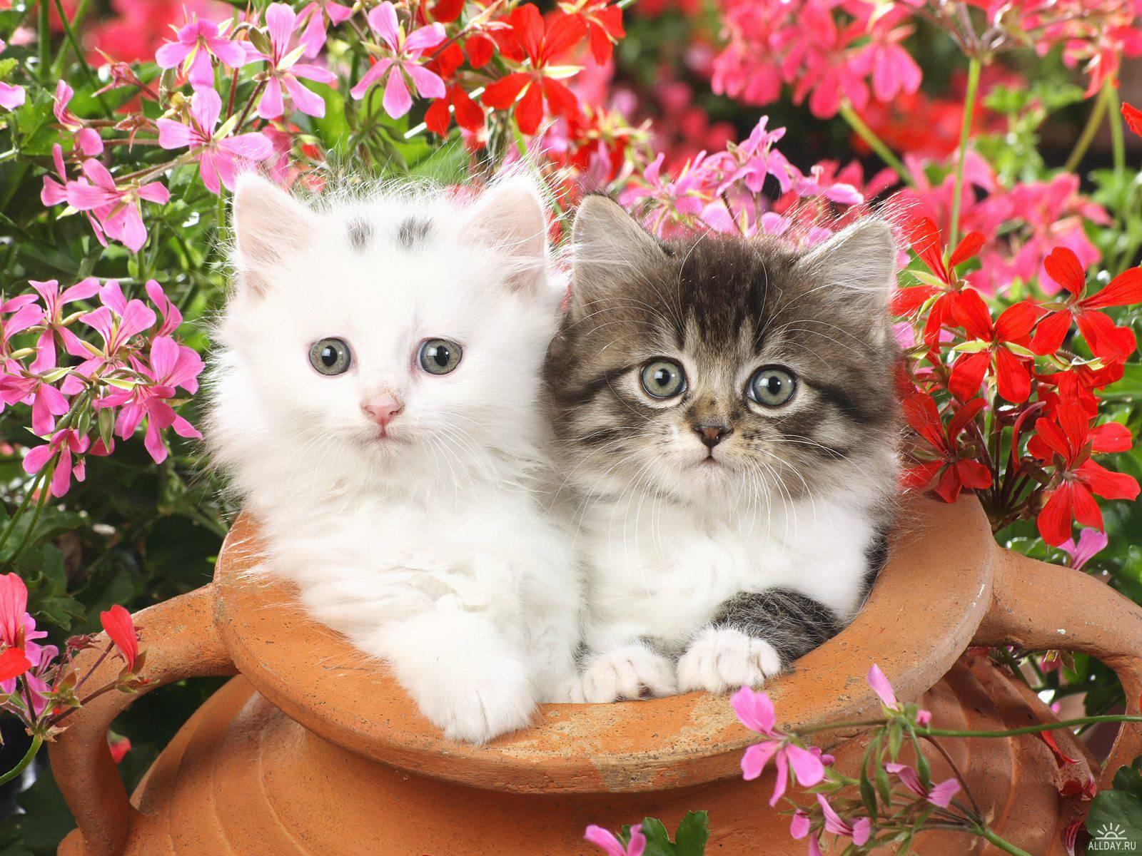 عکس های زیبا ترین حیوانات جهان