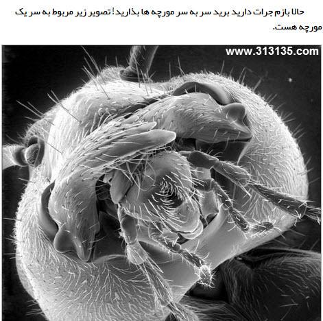 عکس نوشته مورچه