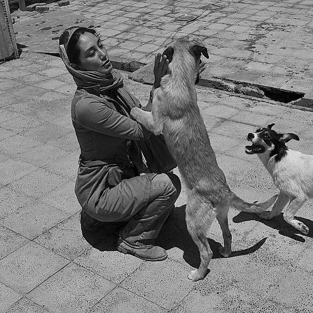 عکس های جدید و زیبای هدیه تهرانی
