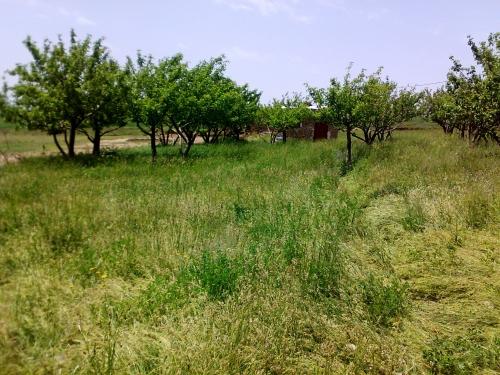 باغات سیه کلان-باغ روستای سیه کلان