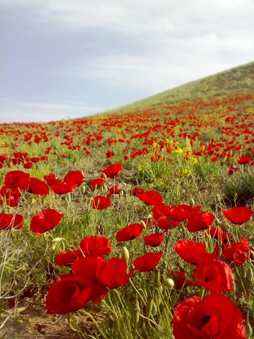 گل های طبیعت سیه کلان