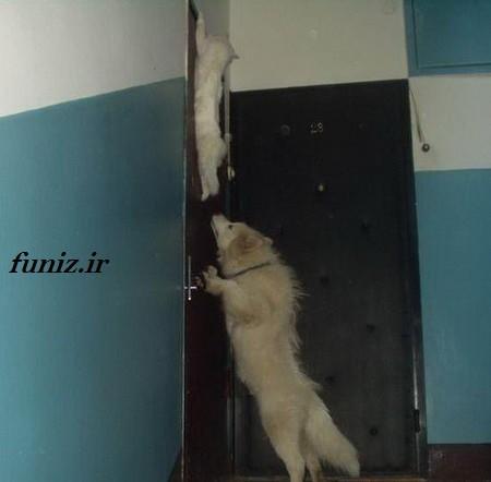 کار های عجیب حیوانات