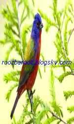 عکس های زیبا و دیدنی از دنیای پرندگان