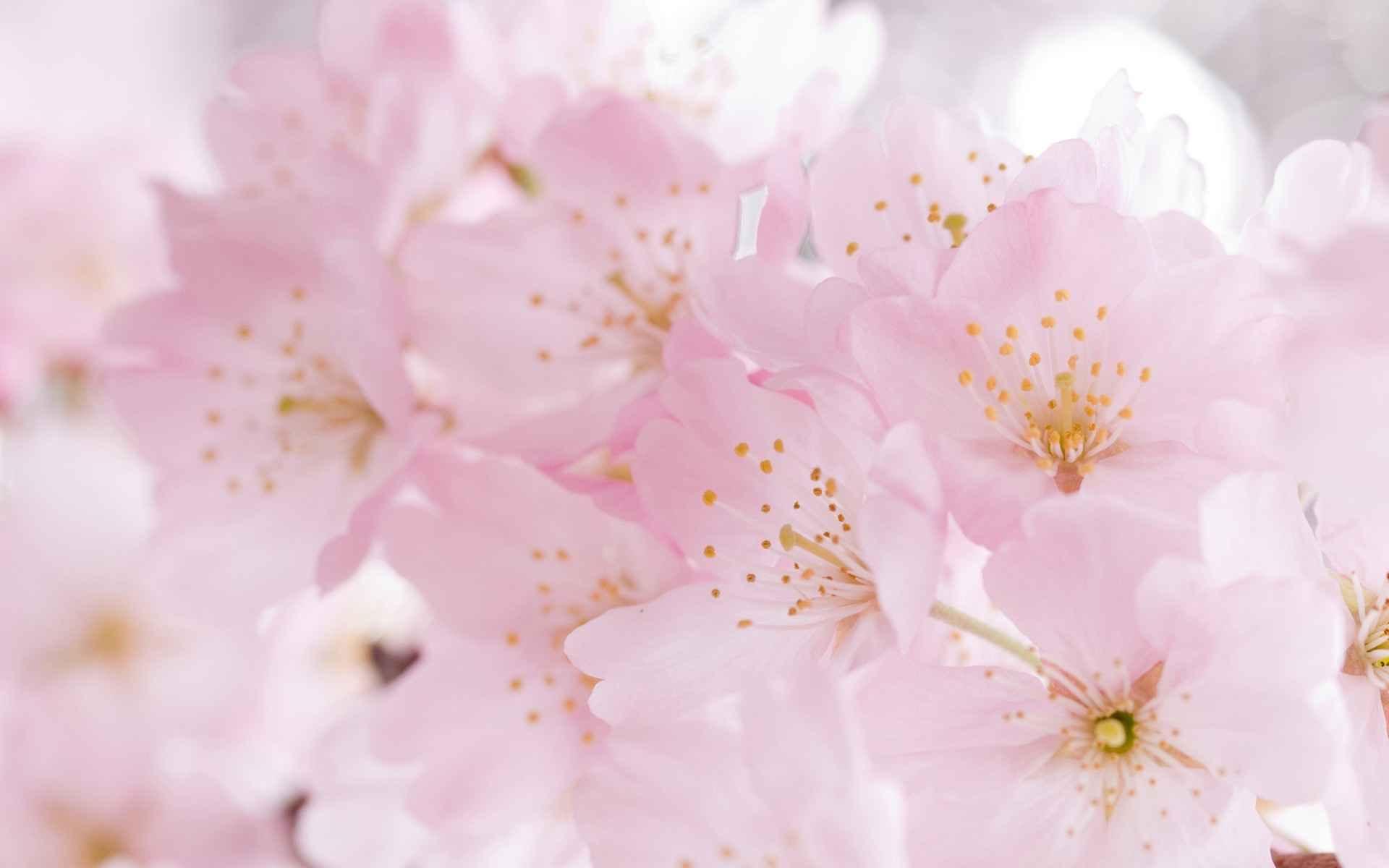 زنان زیبا با عکس گل های زیبا