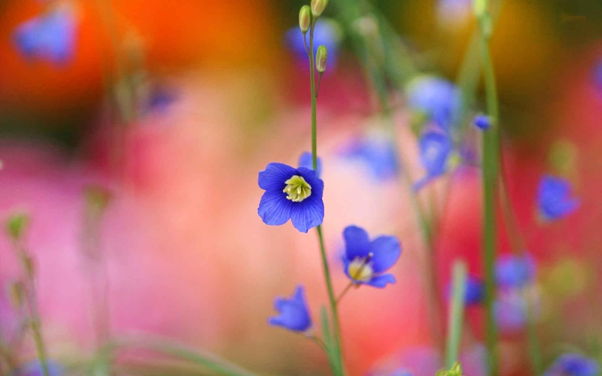 عکس گل های زیبا