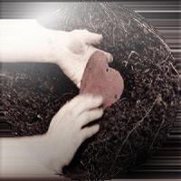 مرگ دل چگونه است؟
