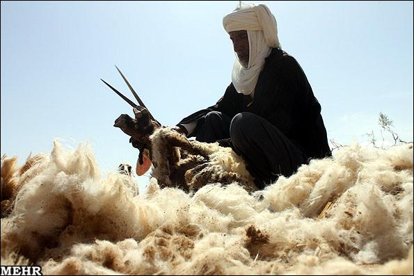 بري كردن گوسفند درروستابمرود