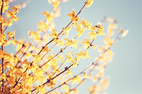 عکس های جذاب از طبیعت بهاری!