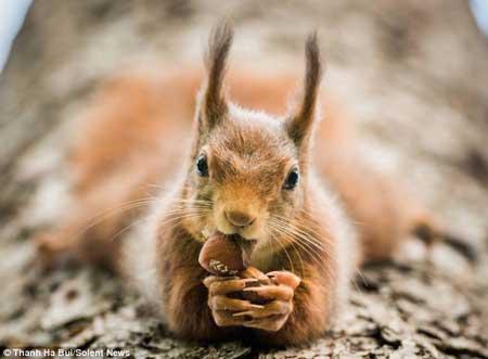صاویر جالب از سنجابی که یوگا بلد است!