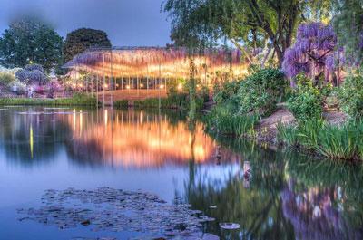 صاویر زیبا از آبشار رویایی گلهای ویستریا!