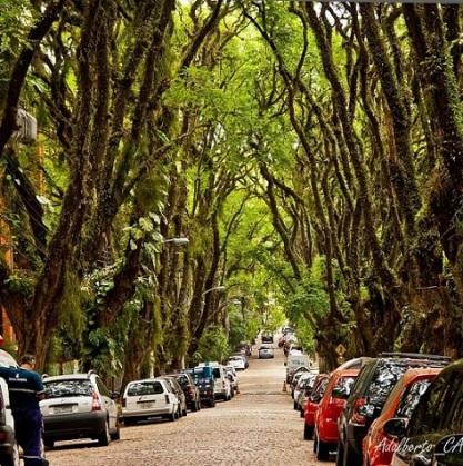 عکس: زیباترین خیابان جهان در برزیل!