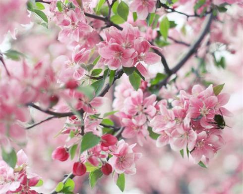 تصاویر زیبا از شکوفه های بهاری !