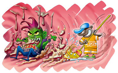 HDL، یا همان کلسترول خوب!