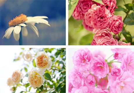 عکس های جدید و قشنگ از گل ها