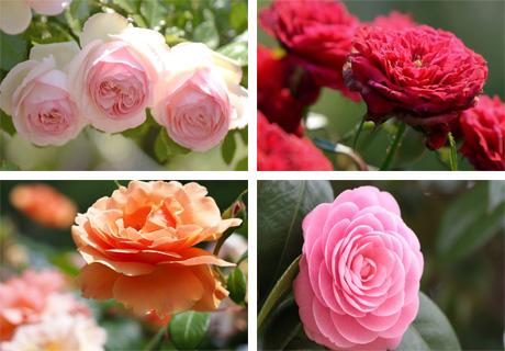 جدیدترین و قشنگترین عکس ها از زیباترین گل ها