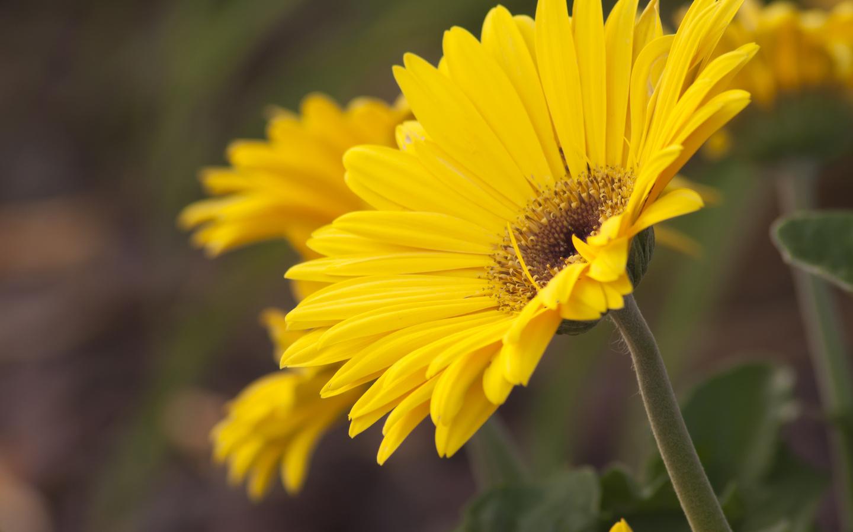 قشنگترین و زیباترین گل ها
