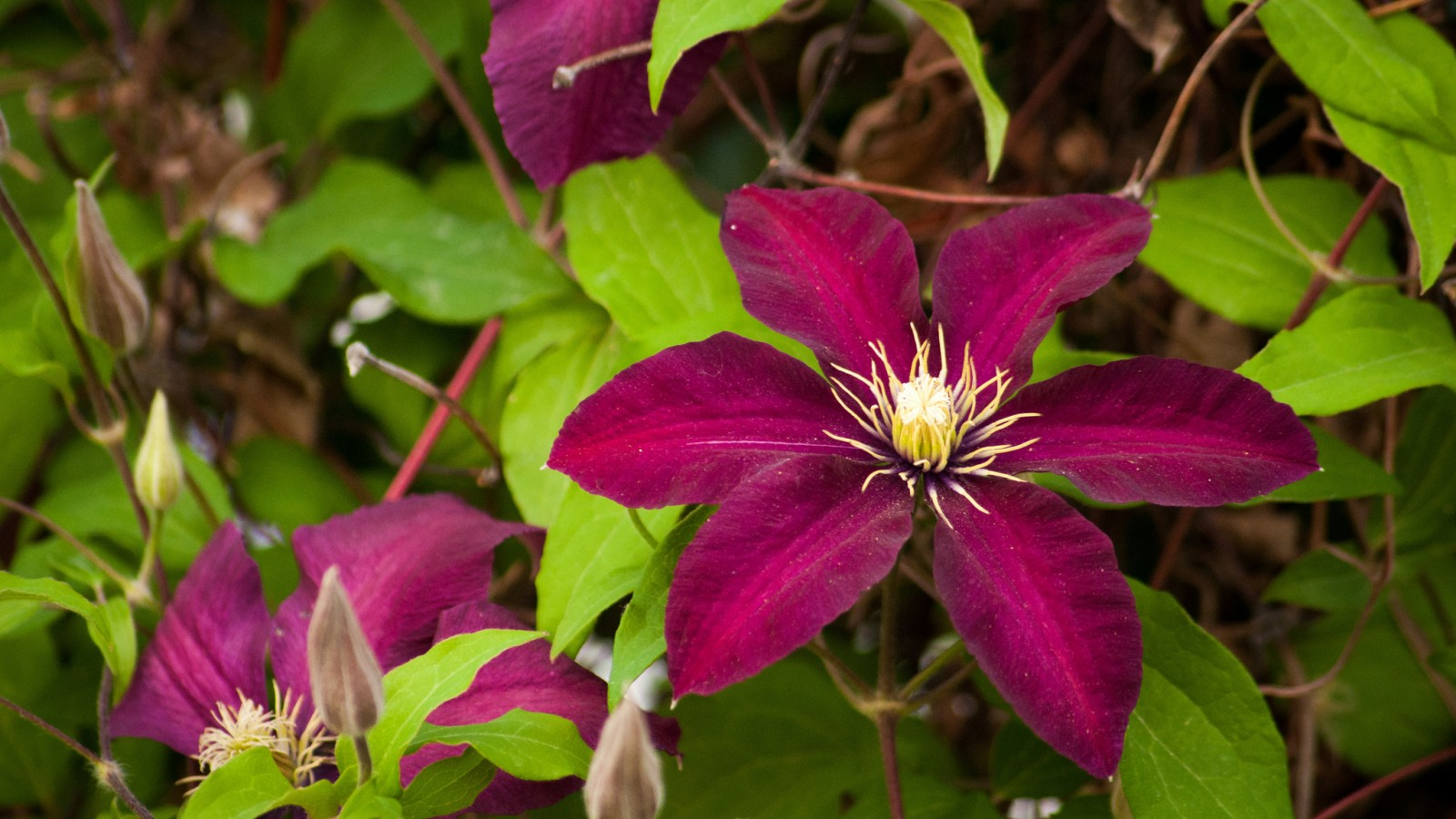 گل های قشنگ و فوق العاده زیبا
