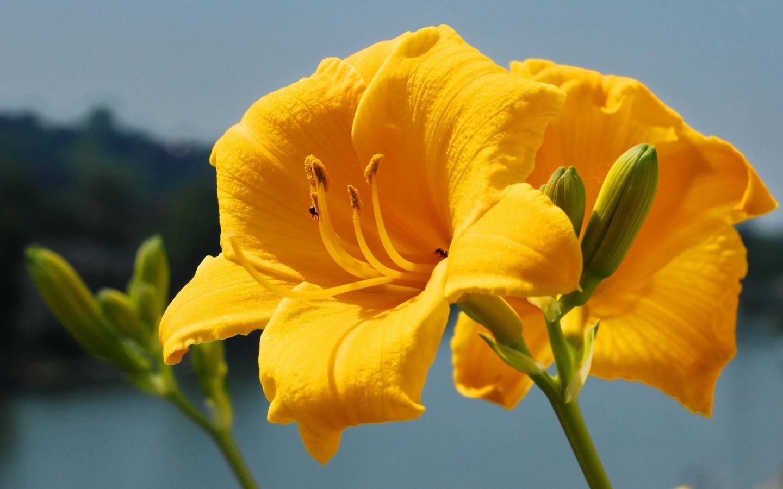 قشنگترین گل ها