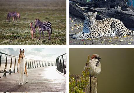 عکس های حیوانات