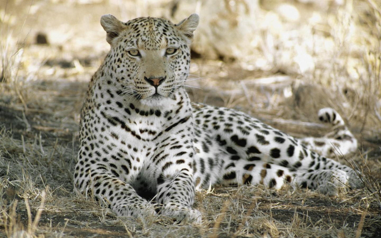 جدیدترین و بهترین عکس ها از حیوانات