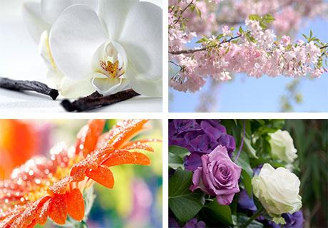 عکس های گل