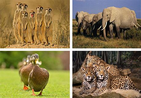 عکس های دسته جمعی از حیوانات
