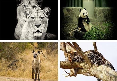 عکس های بسیار زیبا از حیوانات وحشی