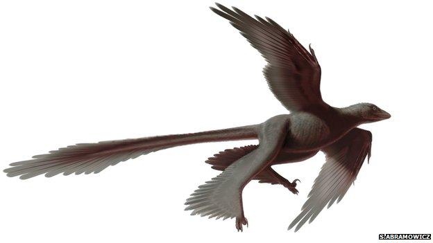 فسیل 'بزرگترین دایناسور چهاربال' جهان کشف شد