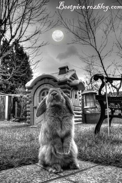 http://rozup.ir/up/bestpics/cute-rabbits/rabbits1.jpg