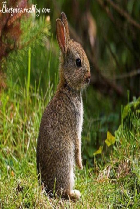 http://rozup.ir/up/bestpics/cute-rabbits/rabbits2.jpg