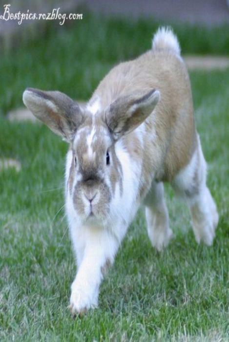 http://rozup.ir/up/bestpics/cute-rabbits/rabbits3.jpg