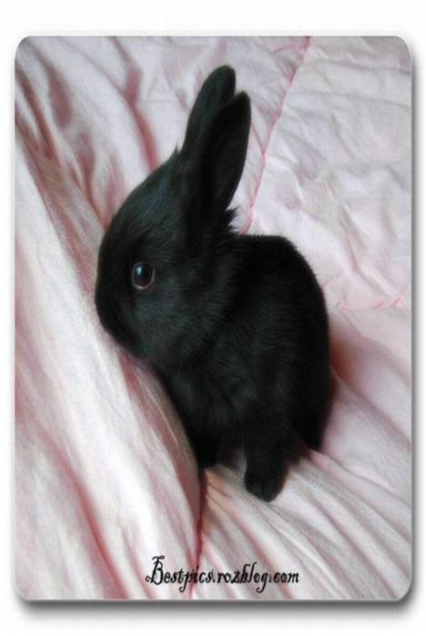 http://rozup.ir/up/bestpics/cute-rabbits/rabbits4.jpg