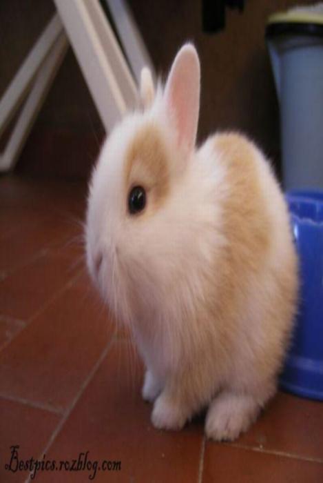 http://rozup.ir/up/bestpics/cute-rabbits/rabbits5.jpg