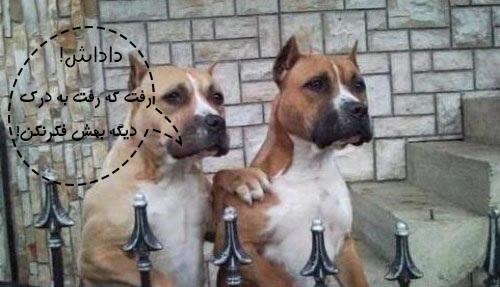 عکس نوشته : خنده دار