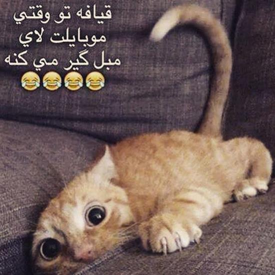 Image result for عکس نوشته خنده دار