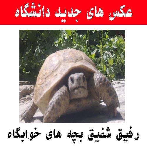 http://rozup.ir/up/daneshgah-elm-va-adab-novin/Pictures/daneshgah/13.jpg