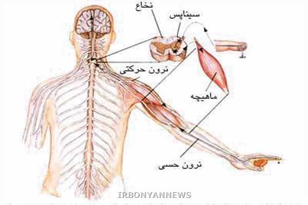 http://rozup.ir/up/daneshgah-elm-va-adab-novin/brain_main5.jpg