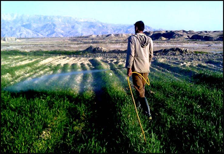 تصویر سم پاشی در شهرستان دشتستان