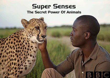 دانلود فصل اول مستند Super Senses The Secret Power Of Animals Season 1 2014