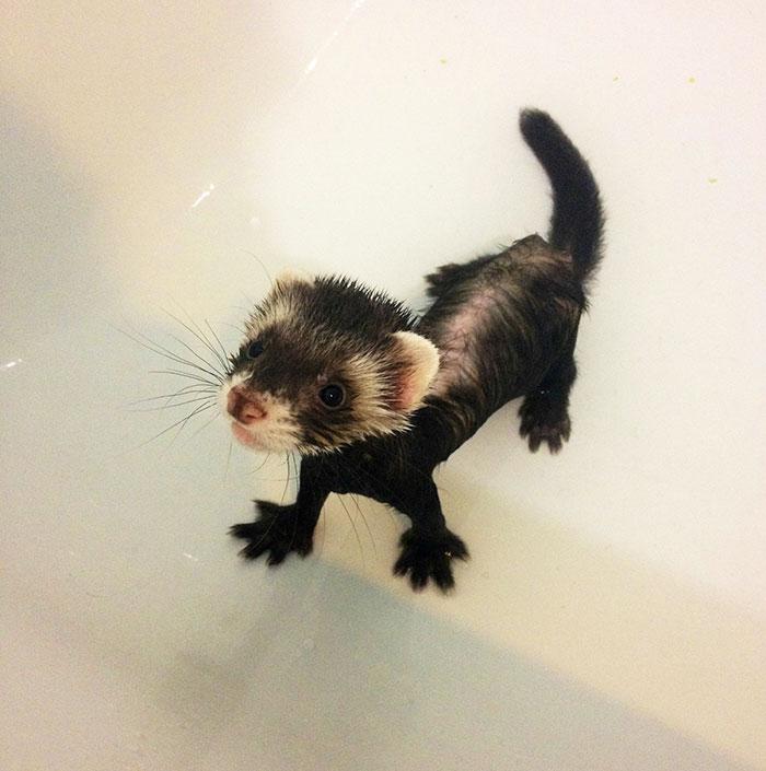 تصاویر جالب از موش خرماهای شیطون و باهوش