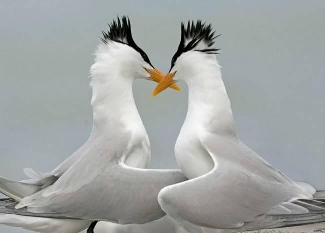 عکس عشق حیوانات