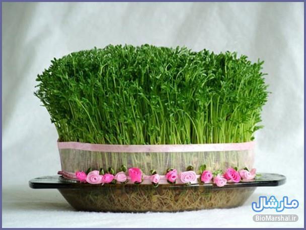 مدل های سبزه عید نوروز 94
